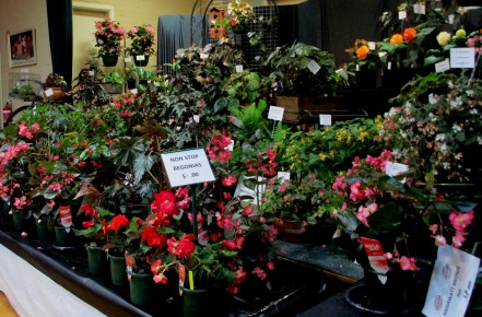 Melbourne Begonia Society 2018 Show