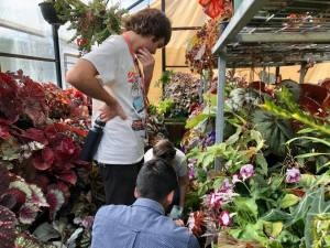Inspired By Begonias - Melbourne Begonia Convention 2020