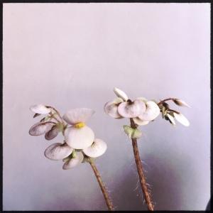 B Bill Morris (Flowers)   [Grower: L Keim]