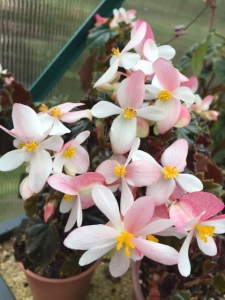 B unknown (Flowers)   [Grower: J Wood]