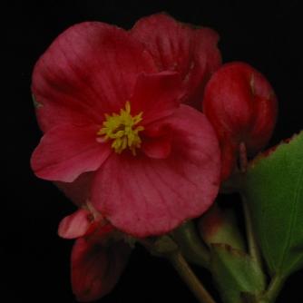 B Chance seeding (semp )(Flowers)
