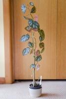 B U168 (foliage)