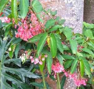 B unknown (flower)
