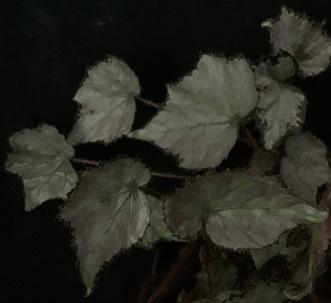 B. Coral Cay (Foliage)